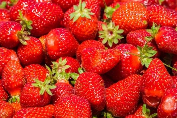 """【今日は何の日?】最大糖度18度!谷中農園の""""贅沢イチゴ""""がすごい!"""