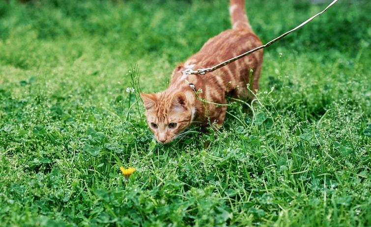 猫用ハーネス