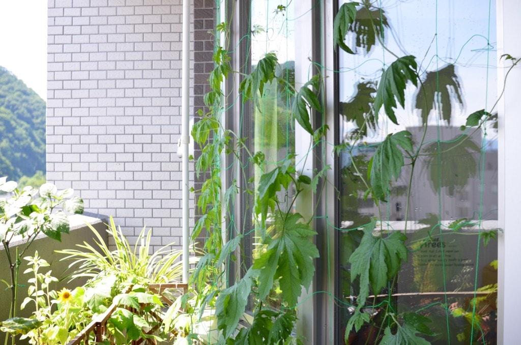 植物用の棚を突っ張り棒で自作!