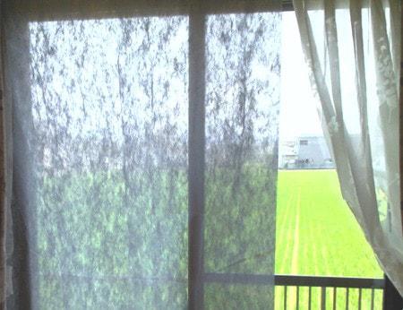 掃き出し窓 カーテン