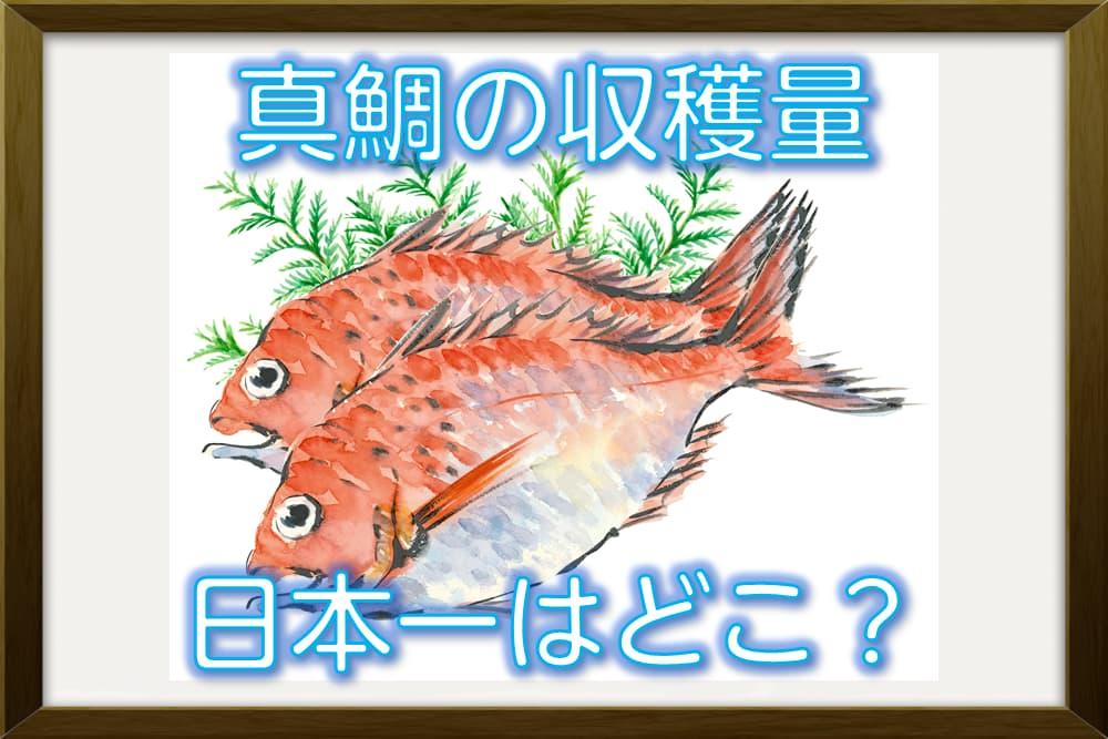オラの里が一番!真鯛の収穫量が全国一なのはどの都道府県?