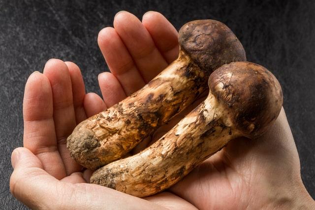 松茸の上手な選び方