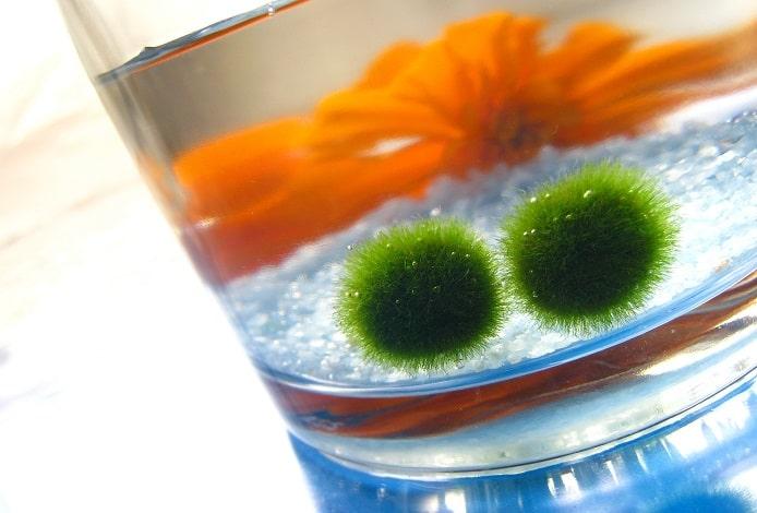 【今日は何の日?】飾れる小さなアクアリウム!簡単飼育で癒しの空間を♪