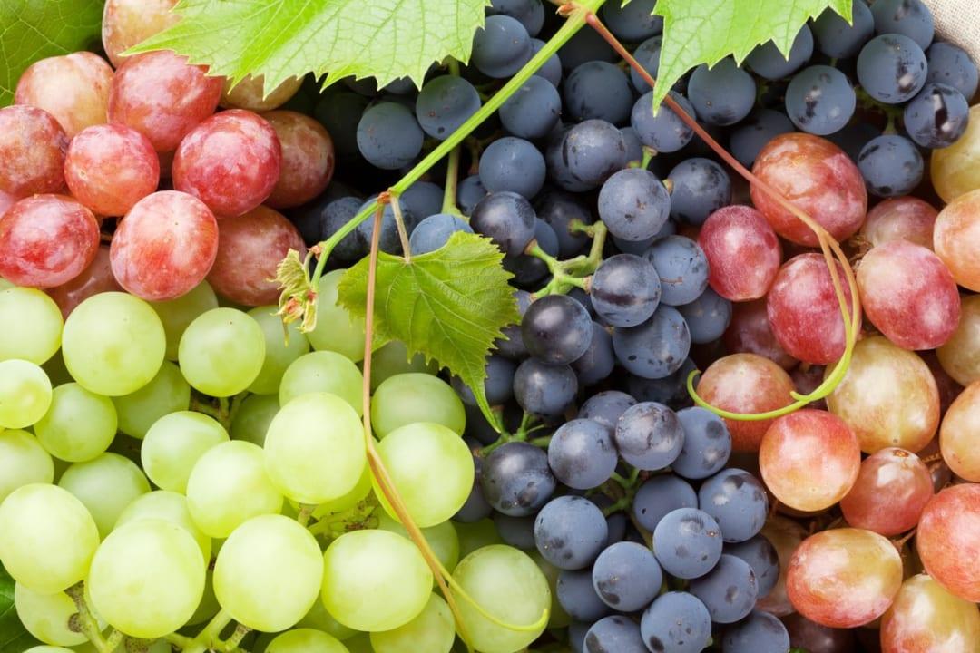 今が旬!ぶどうの種類と栄養価、長持ちする保存方法とは