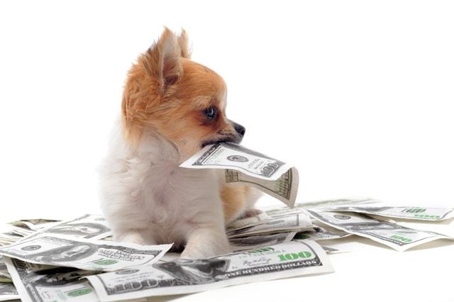 ペット経済力