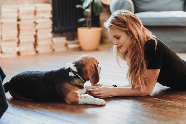 一人暮らしでも飼えるおすすめペット|飼育が簡単で室内でも飼える人気のペットを紹介