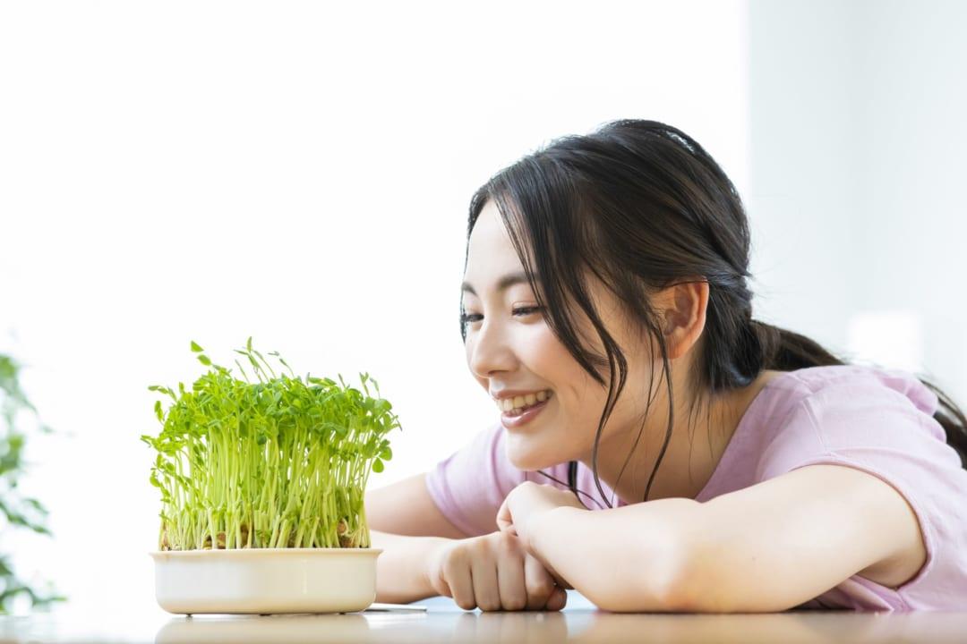 部屋でサラダ野菜が作れる?!土なし庭なしでも楽しめる水耕栽培