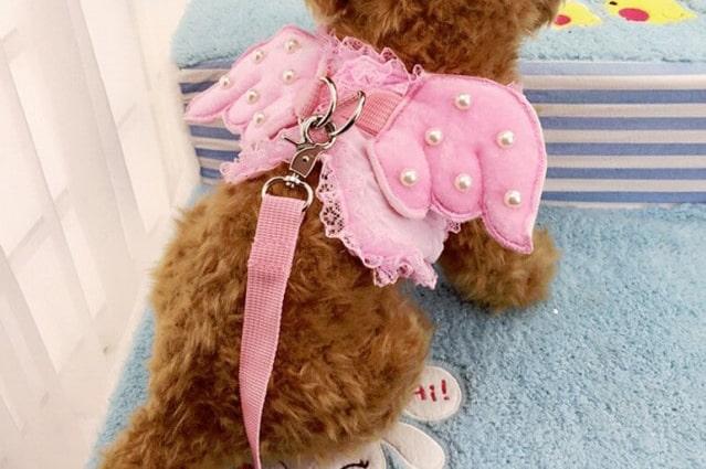 ピンクの天使 レース ハーネス
