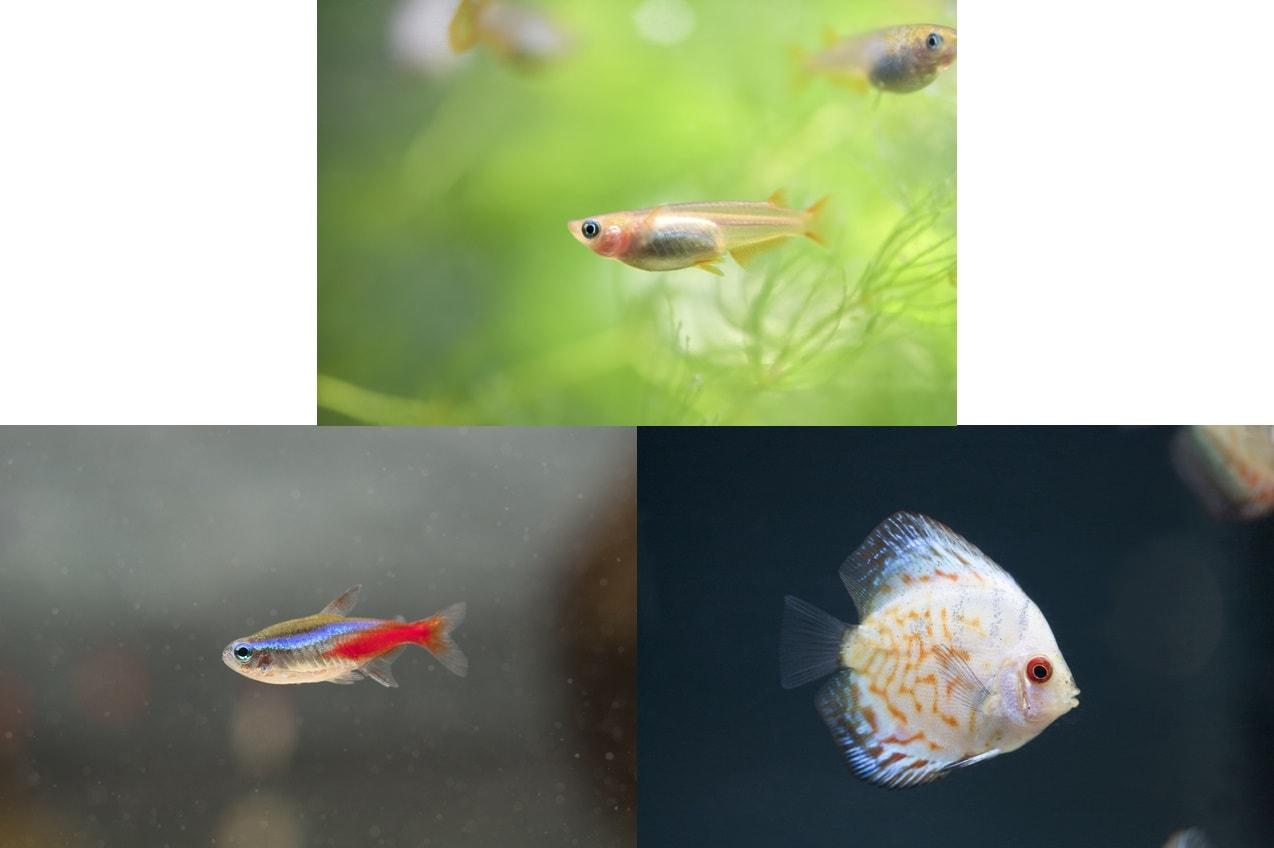魚(金魚・熱帯魚など)の種類