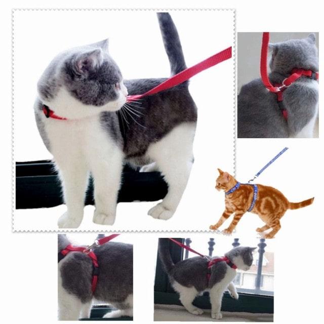 猫のリード&ハーネスセット